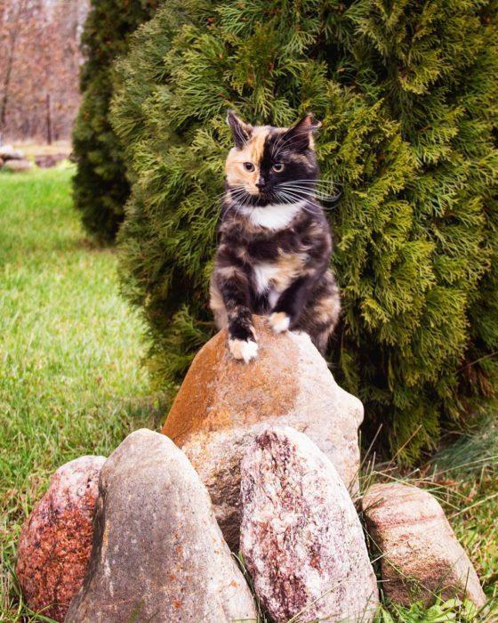 gata quimera sobre unas piedras
