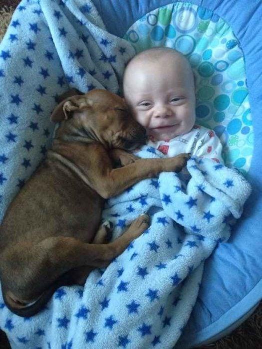 cachorro abrazando a bebé