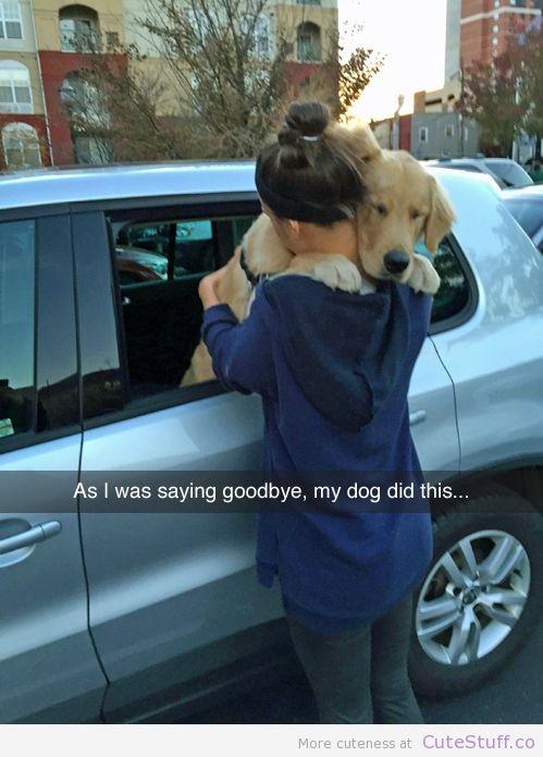 perro se despide de su dueña
