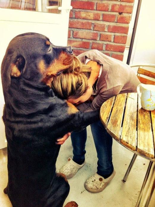 perro consolando a su dueña