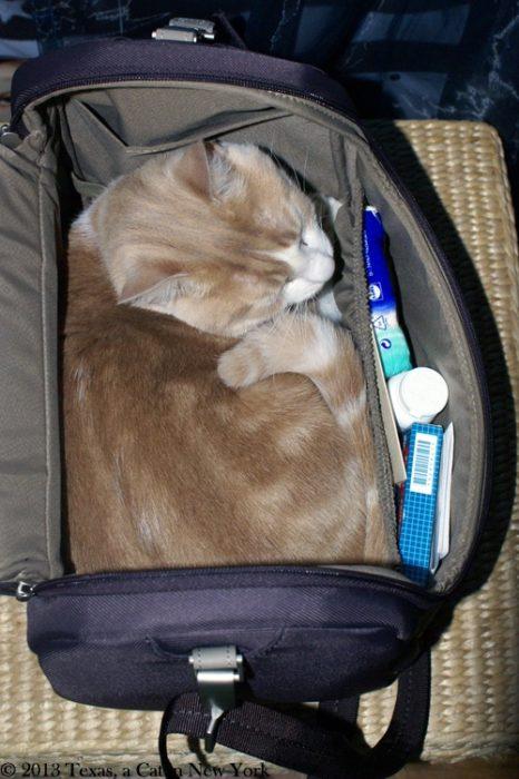gato adentro de maletin
