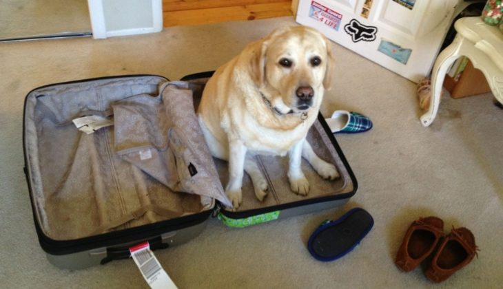 Perro grande sentado encima de una maleta