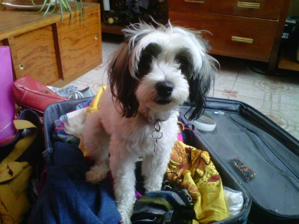 Mishka adentro de maleta