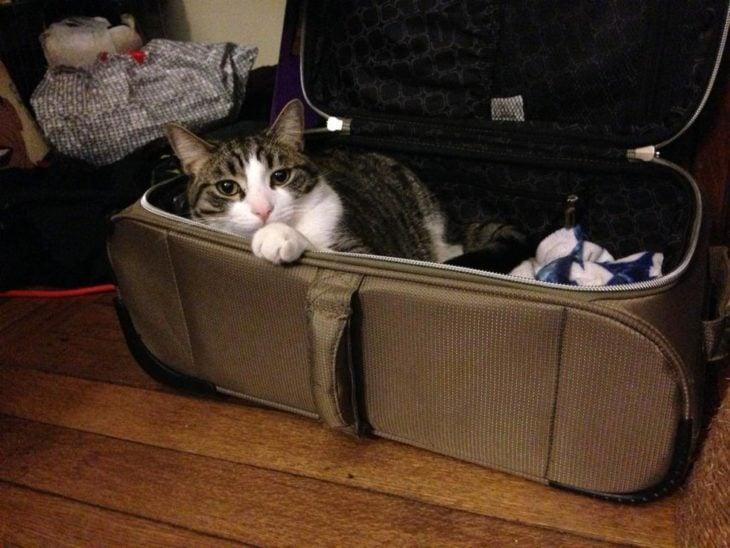 Gato adentro de maleta