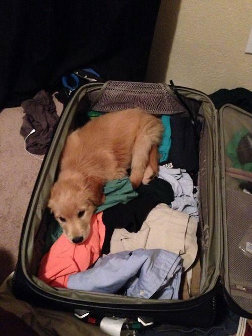 Cachorro acostado en maletea