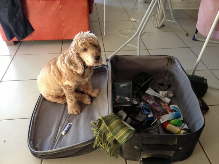 Perro cafe sentado en maleta