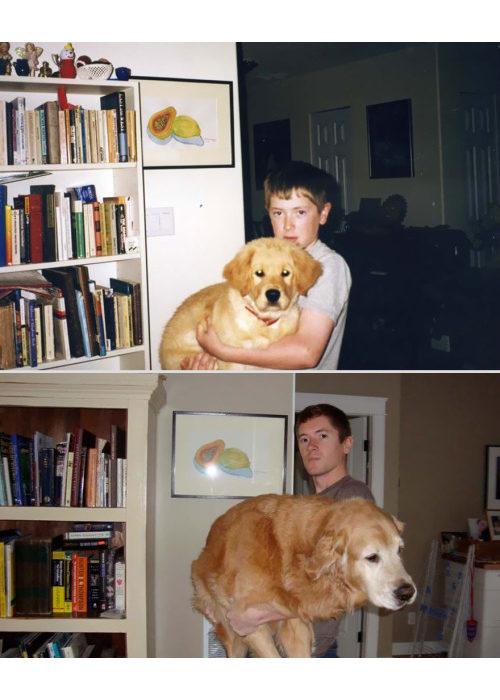 antes-y-despues-mascotas-4