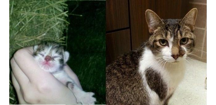 Antes y despues mascotas 5