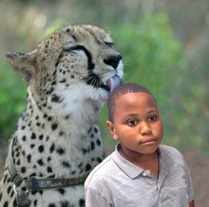 Batalla cheeta 12