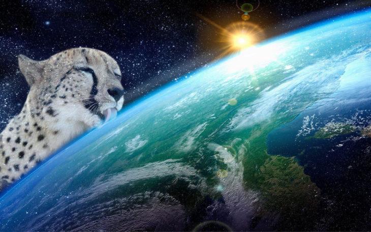 Batalla cheeta 3