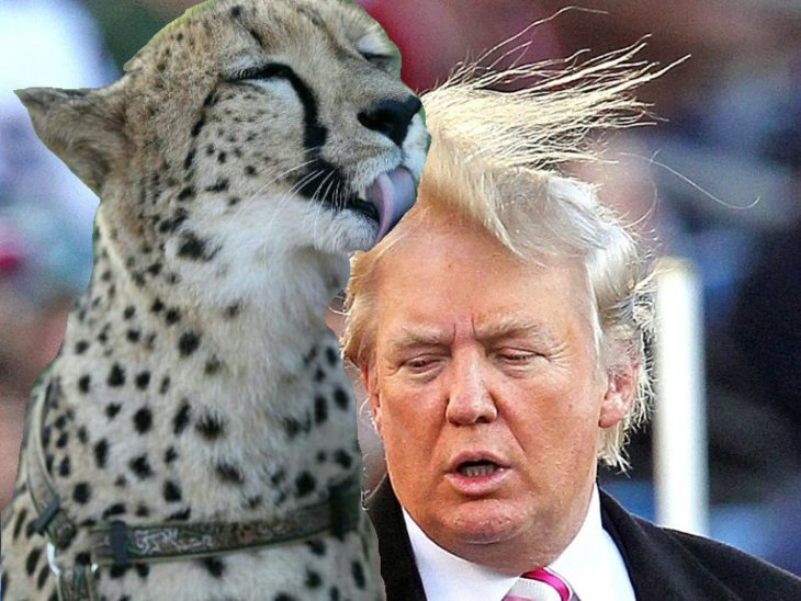 Batalla cheeta 4