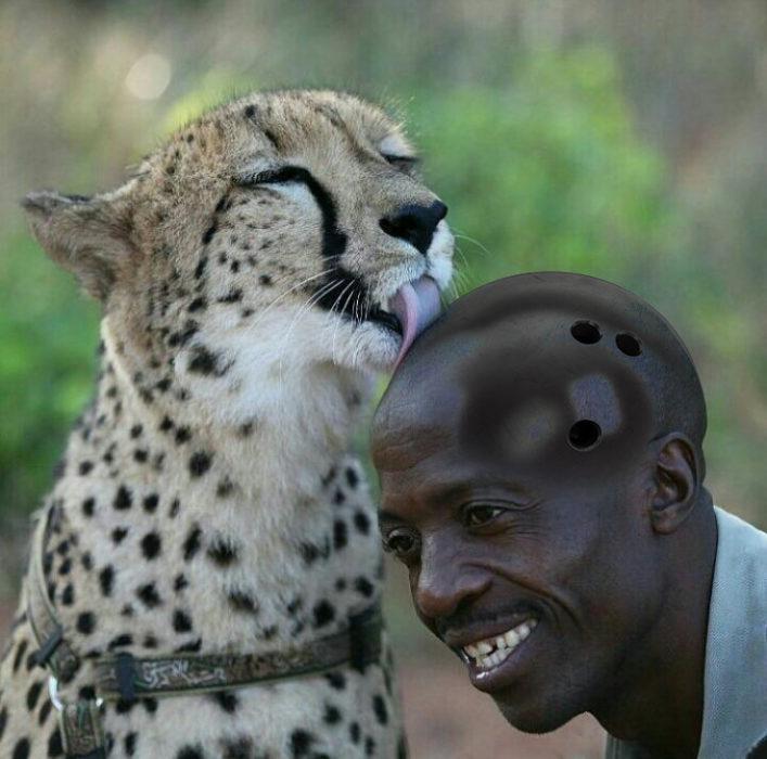 Batalla cheeta 6
