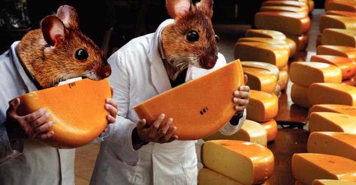 Batalla queso 2