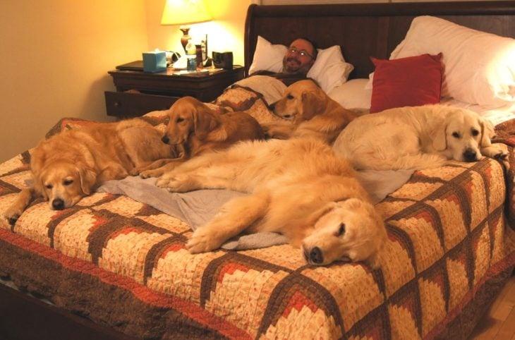 Comportamiento perros