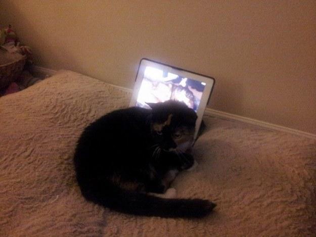 gato acostado frente a ipad