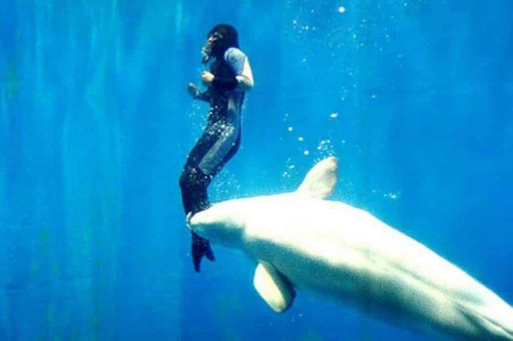 ballena toma a buzo