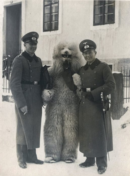 Fotos increibles II GM oso fanta