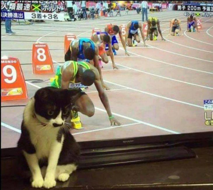 gato frente a tele en carreras