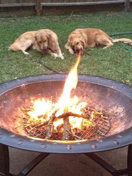 perro bosteza y parece que lanza fuego