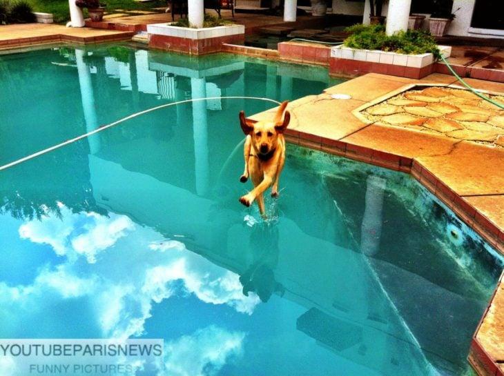 parece que un perro camina sobre el agua