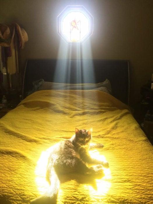 gato justo en donde llega el sol
