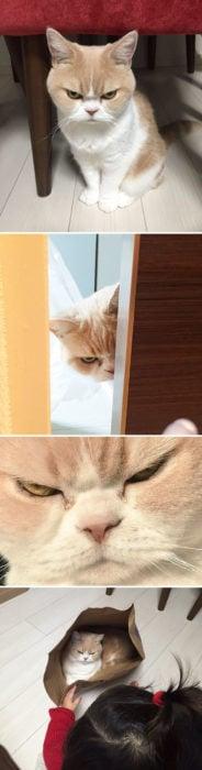 Gato siempre enojado