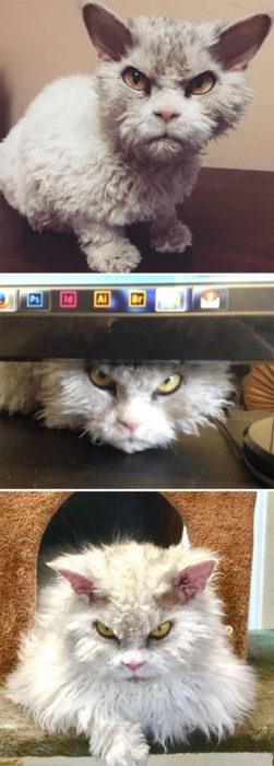 Gato enojado computadora