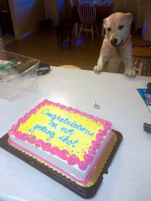 pastel felicidades por no haber muerto