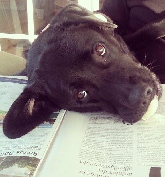 perro recarga su cabeza en una revista abierta