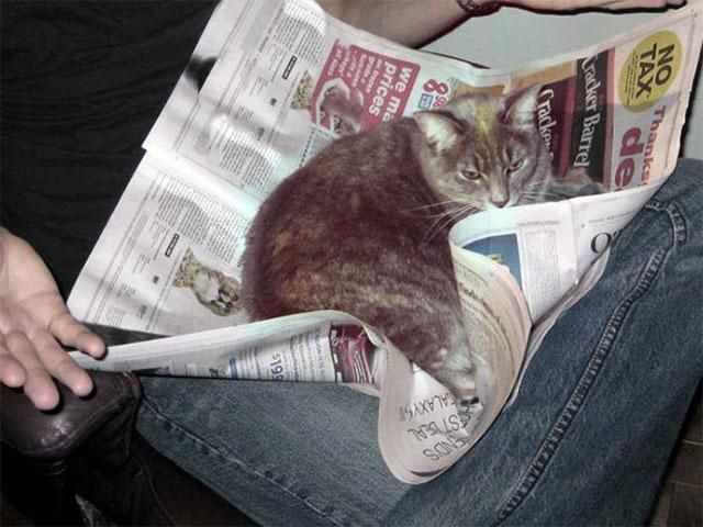 gato acostado sobre el periódico