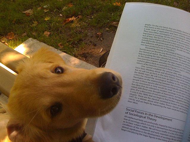 perro mirando a su dueño mientras lee