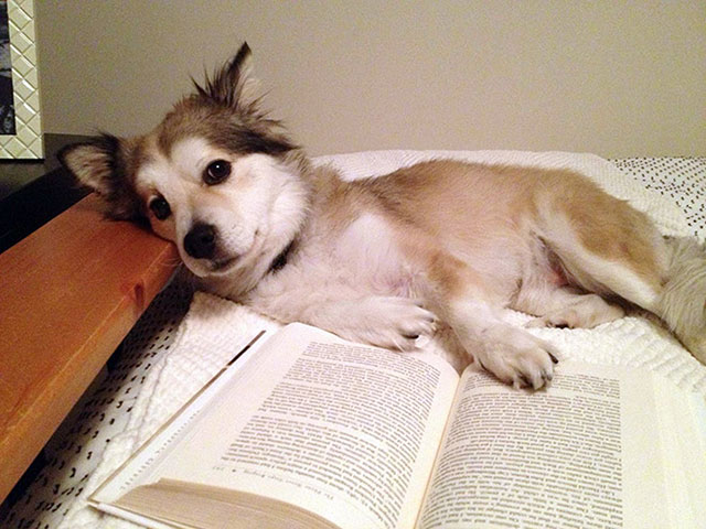perro acostado con la pata en un libro