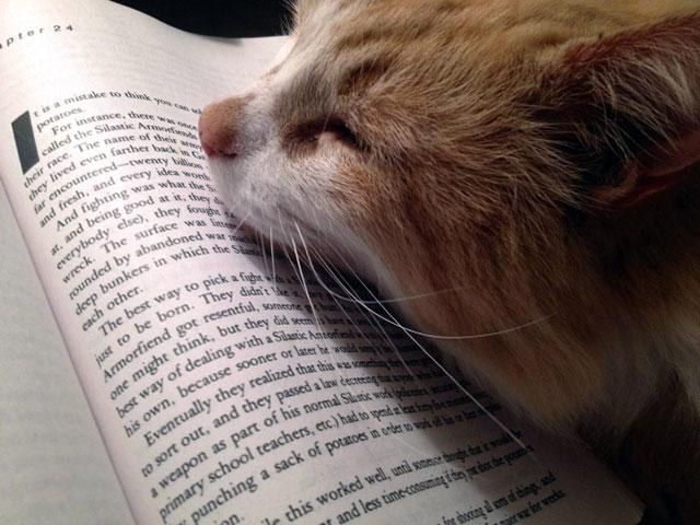 Gato dormido sobre un libro