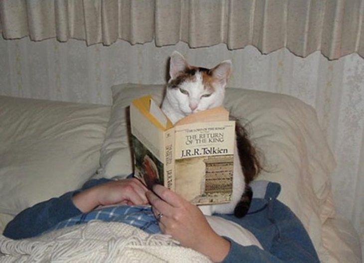gato csentado en la cara de su dueña mientras esta leia