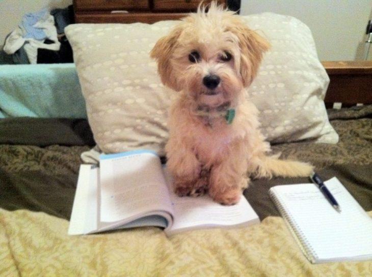 perro sentado encima de libreta