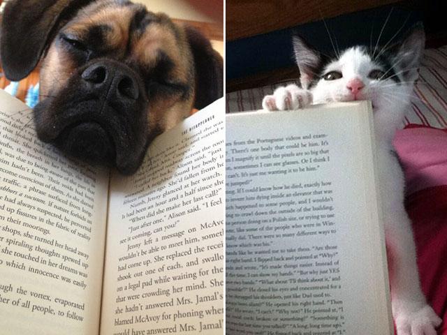 perro y gato no dejan leer