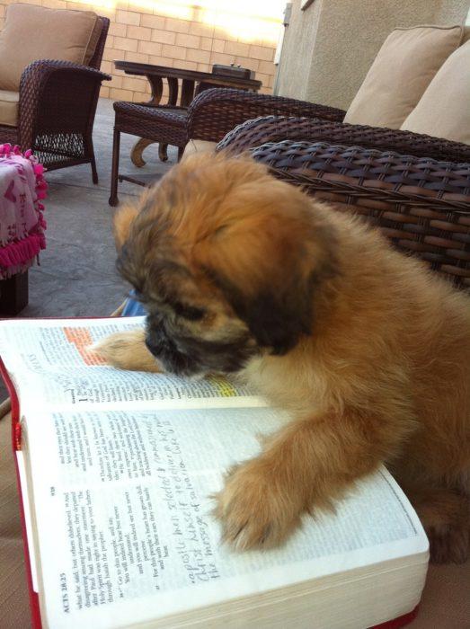 cachorrito leyendo