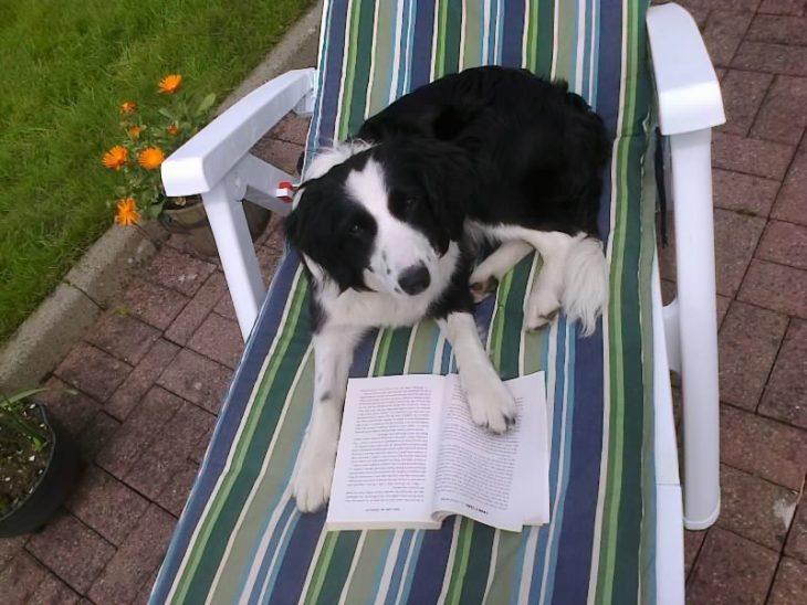 perro tomando el sol y leyendo