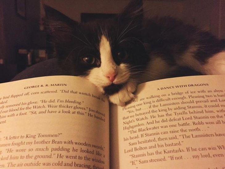 gato distrae a su dueño mientras lee