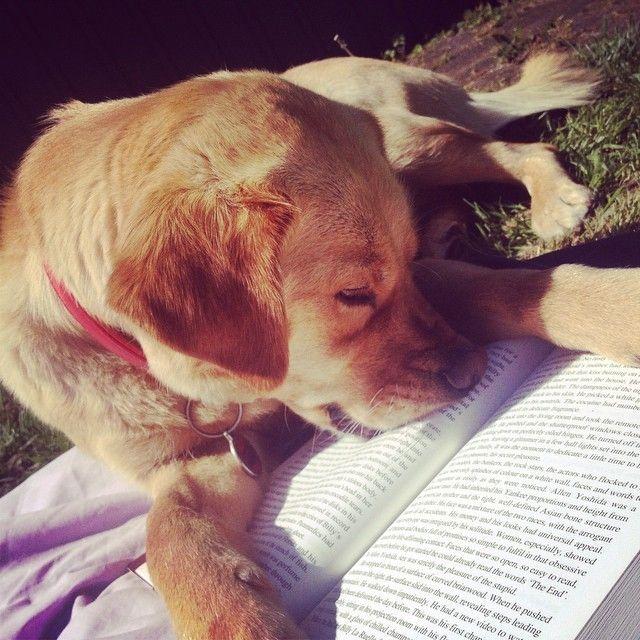 Perro no deja leer a su dueño