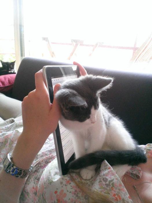 gato sentado justo frente a ipad