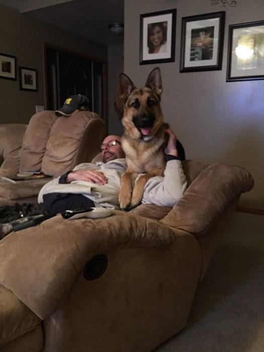 perro en el sillon con papa
