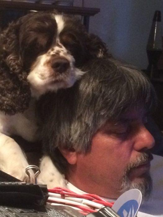 perro como almohada de papa