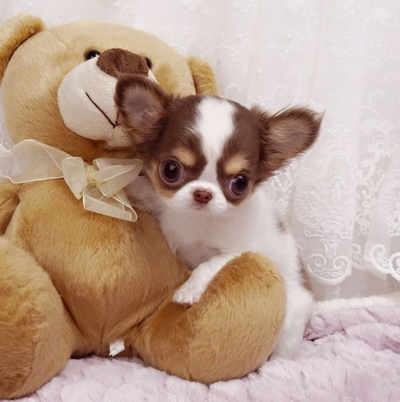 Cute Girly Dogy Toys For Tiny Dogs