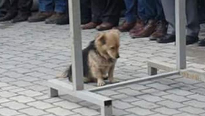 Perro fiel 2