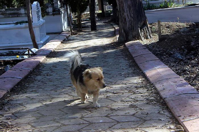 Perro fiel 5