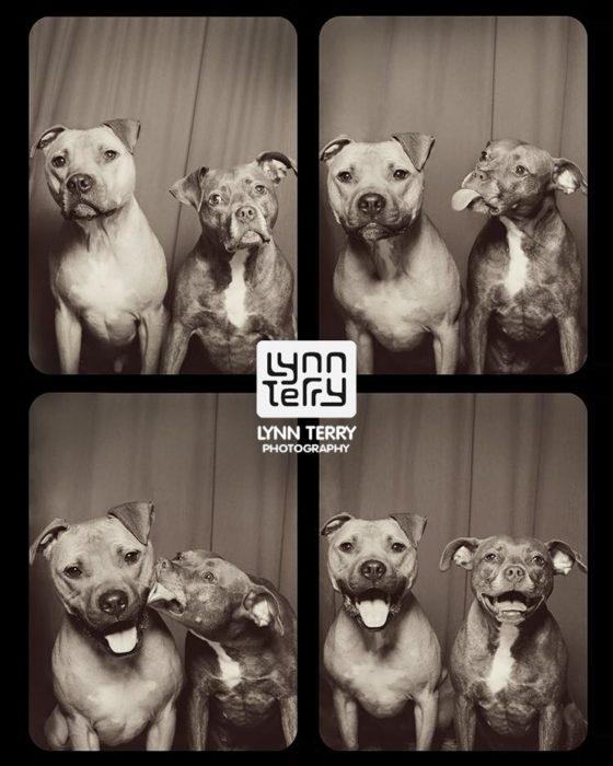 Perros cabina fotos 1