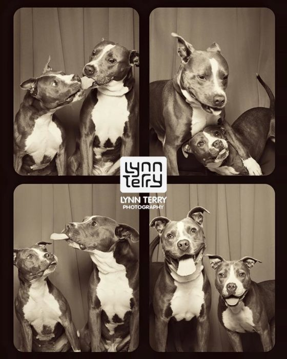 Perros cabina fotos 3