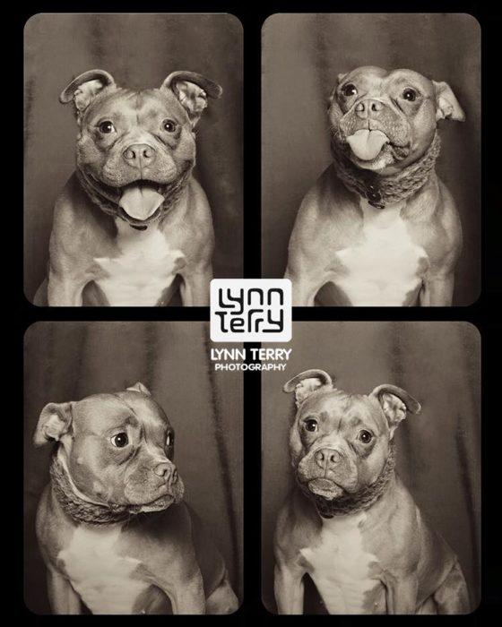 Perros cabina fotos 5