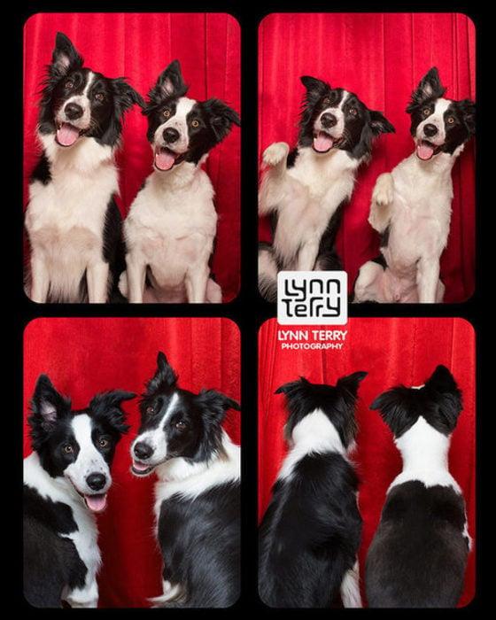 Perros cabina fotos 7